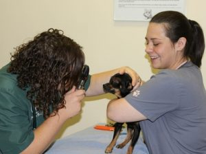 Pet Wellness Exams - Big Lick Veterinary - Roanoke, VA