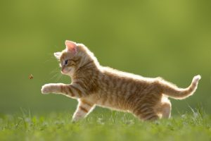 Pet Care Specials - Roanoke Animal Hospital - Roanoke, VA
