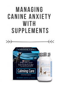 Managing Canine Anxiety With Supplements