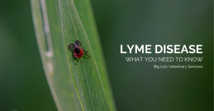 Lyme Disease in Dogs: What You Need To Know | Big Lick Veterinary