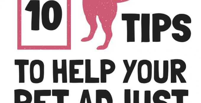 10 Tips To Help Your Pet Adjust Post-Quarantine