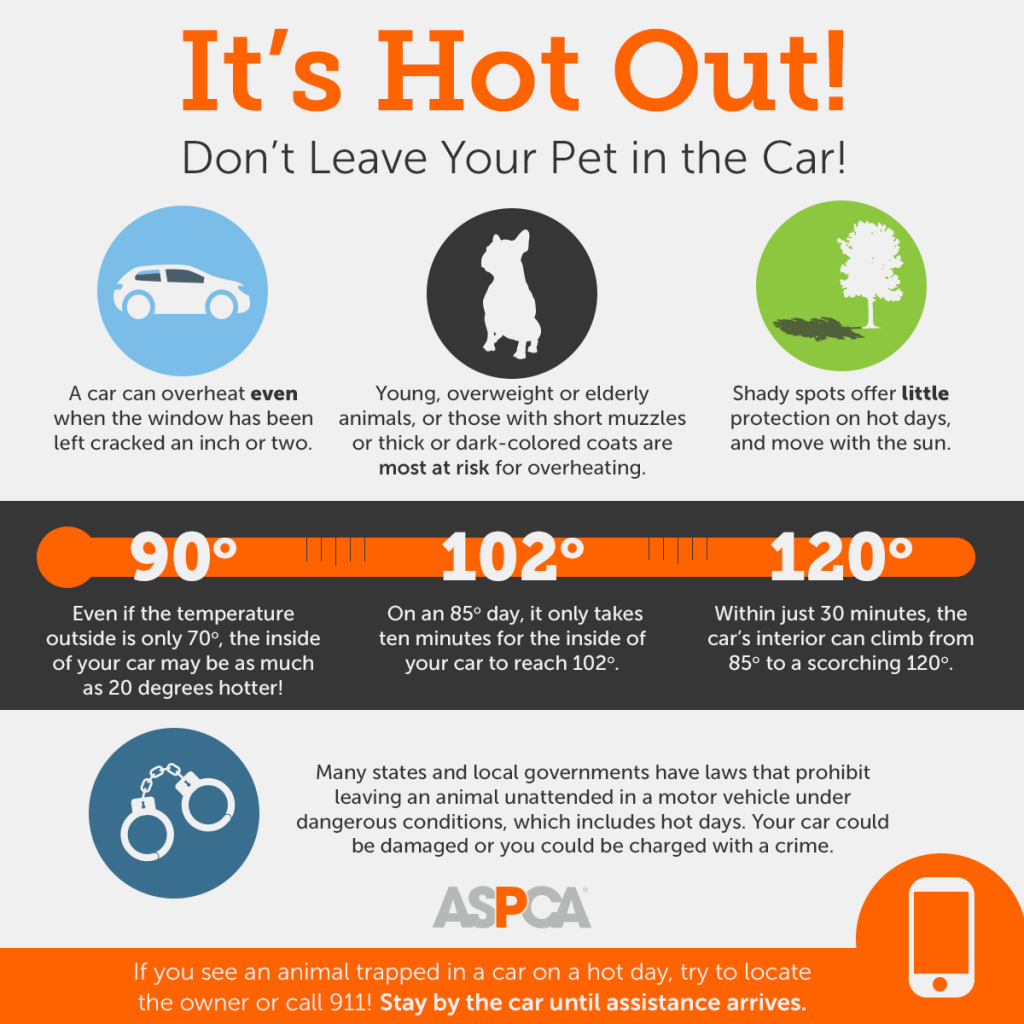 8 Tips To Beat The Heat And Keep Your Pets Safe This Summer