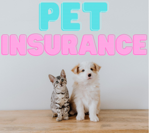 What You Should Know About Pet Insurance