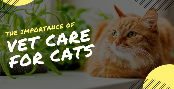 The Importance of Routine Veterinary Care for Cats